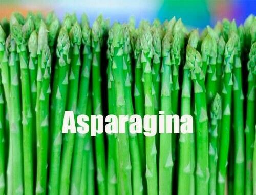 asparagina (Asn)